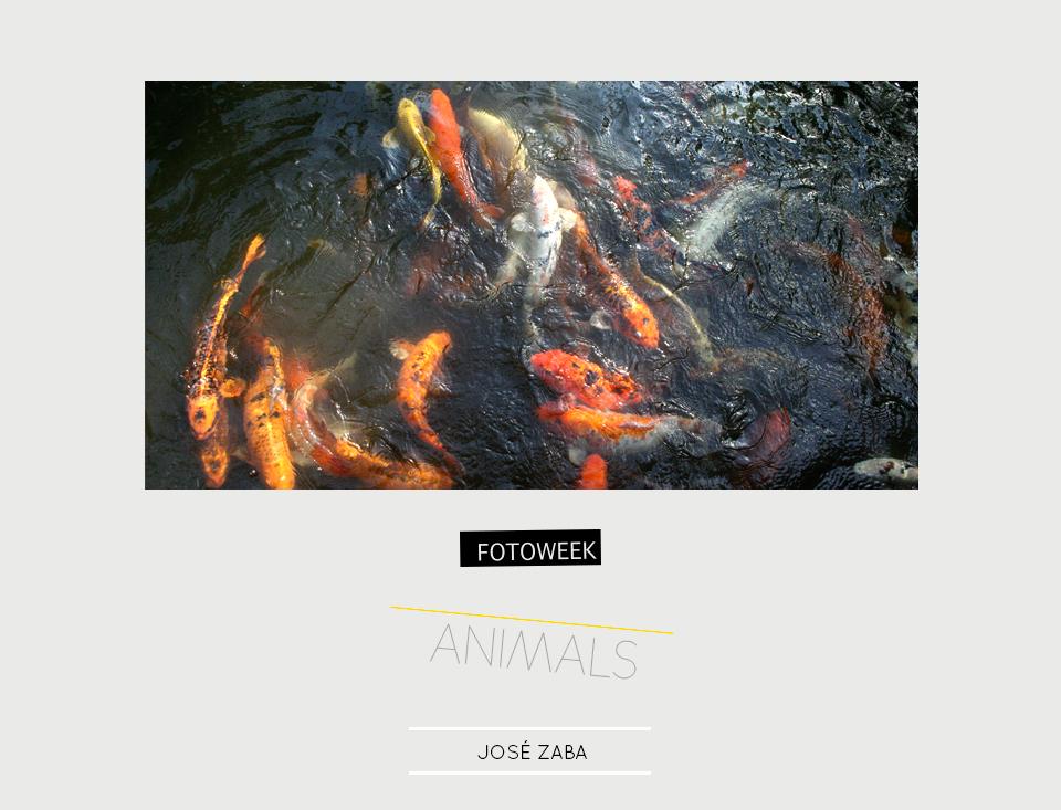 Fotoweek - Animals : José Zaba © moversinmover