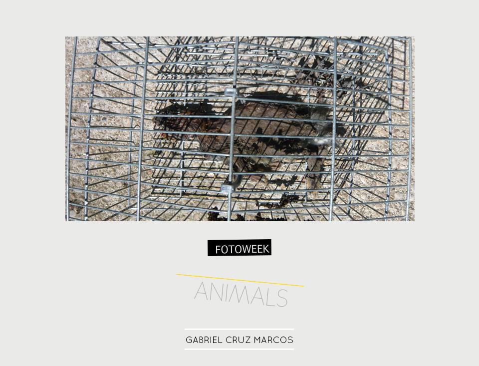 Fotoweek - Animals : Gabriel Cruz Marcos © moversinmover