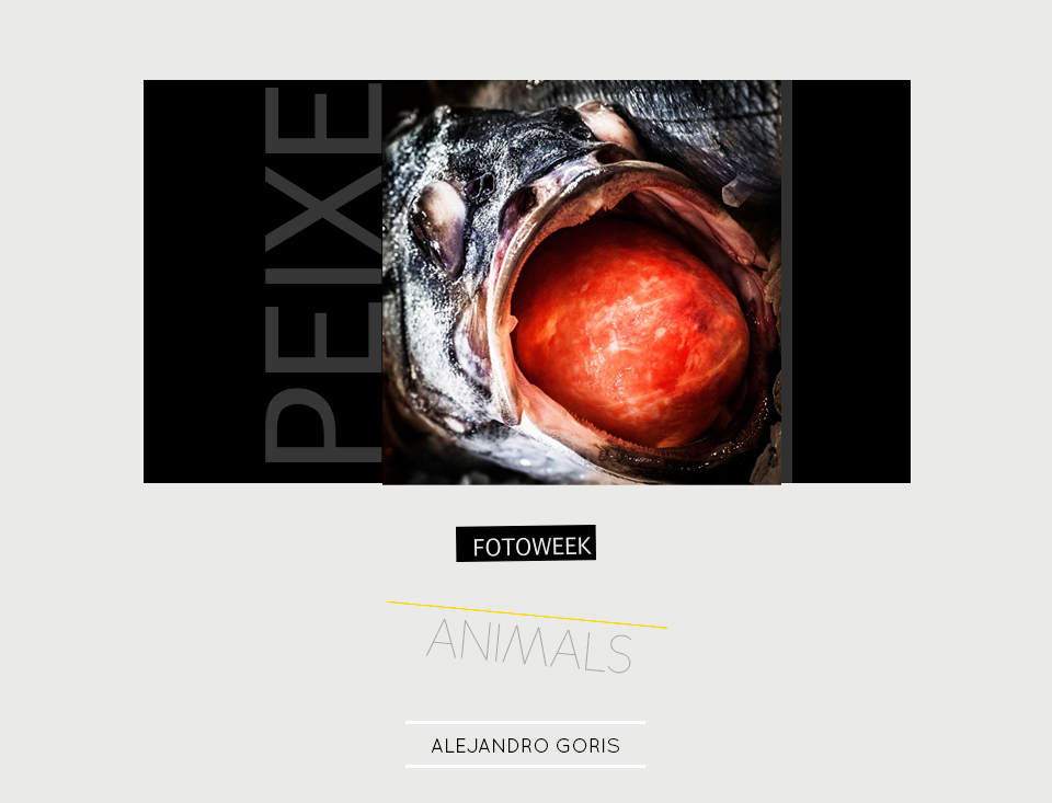 Fotoweek - Animals : Alejandro Goris © moversinmover