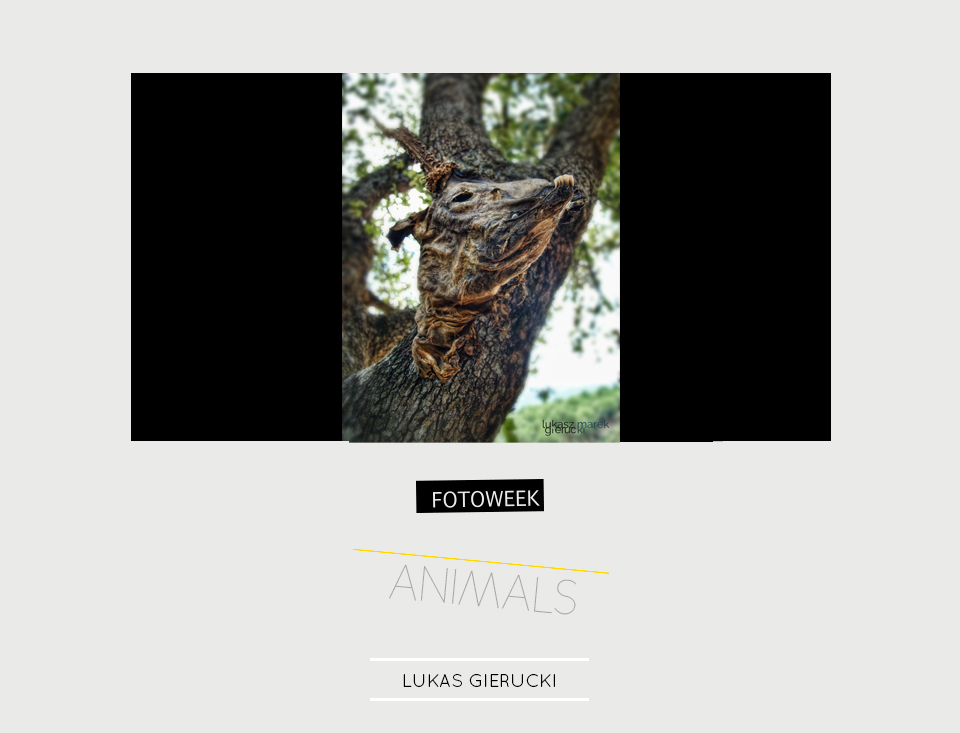 Fotoweek - Animals : Lukas Gierucki © moversinmover
