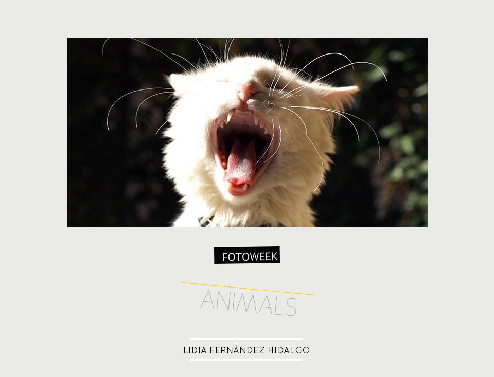 Fotoweek - Animals : Lidia Fernández Hidalgo © moversinmover