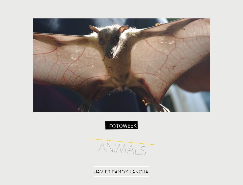 Fotoweek - Animals : Javier Ramos Lancha © moversinmover