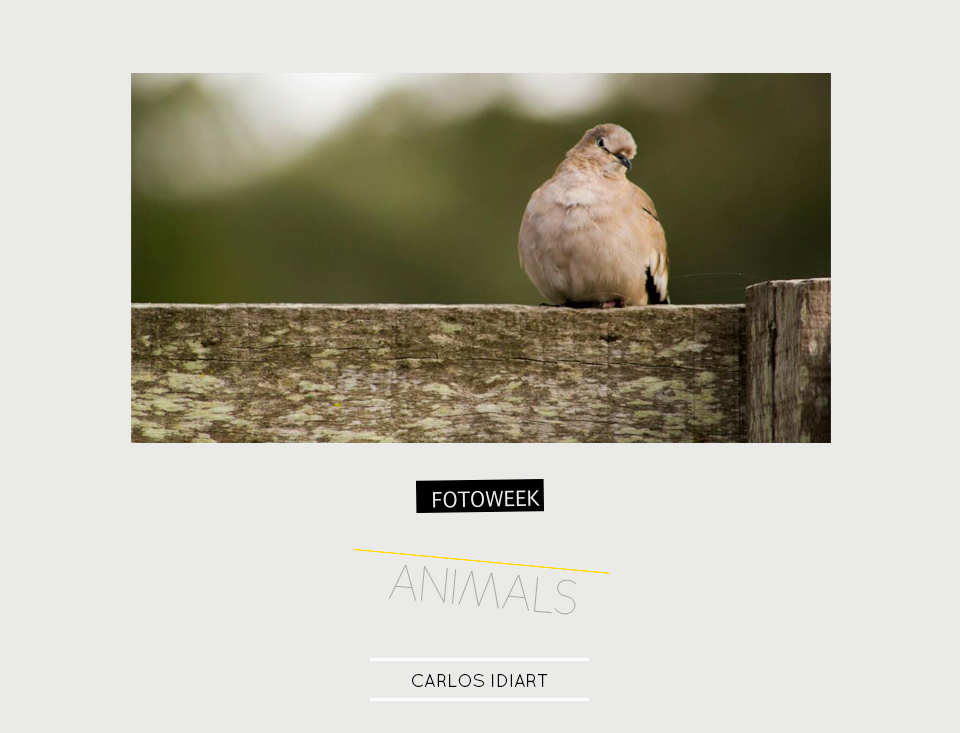 Fotoweek - Animals : Carlos Idiart © moversinmover