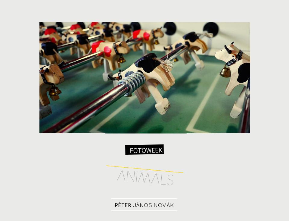 Fotoweek - Animals : Péter János Novák © moversinmover