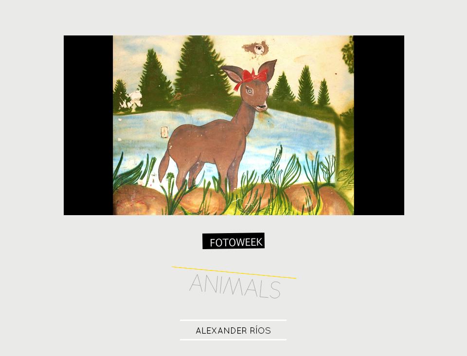 Fotoweek - Animals : Alexander Ríos © moversinmover