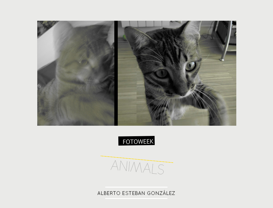 Fotoweek - Animals : Alberto Esteban González © moversinmover