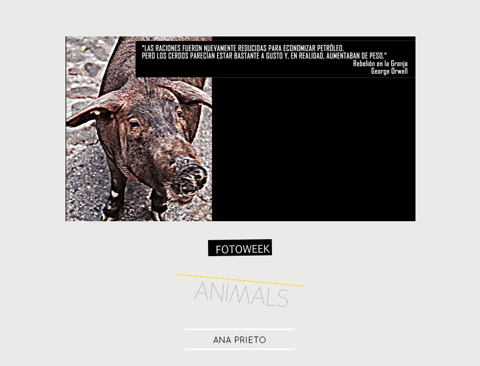 Fotoweek - Animals : Ana Prieto © moversinmover