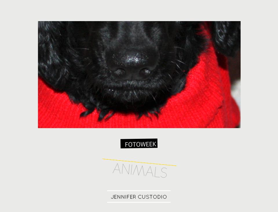 Fotoweek - Animals : Jennifer Custodio © moversinmover