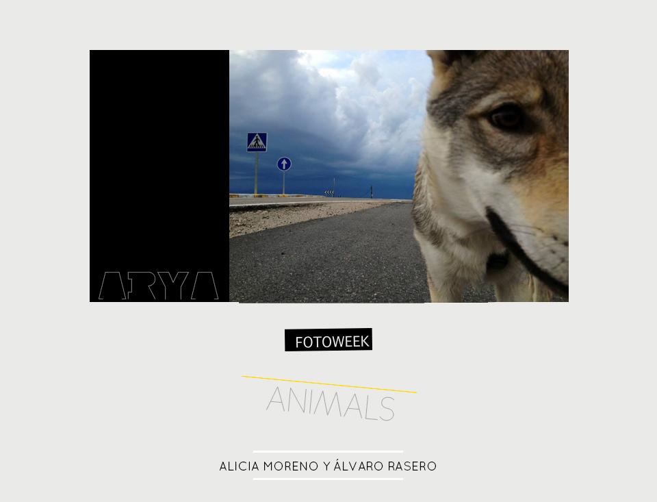 Fotoweek - Animals : Alicia Moreno y Álvaro Rasero © moversinmover