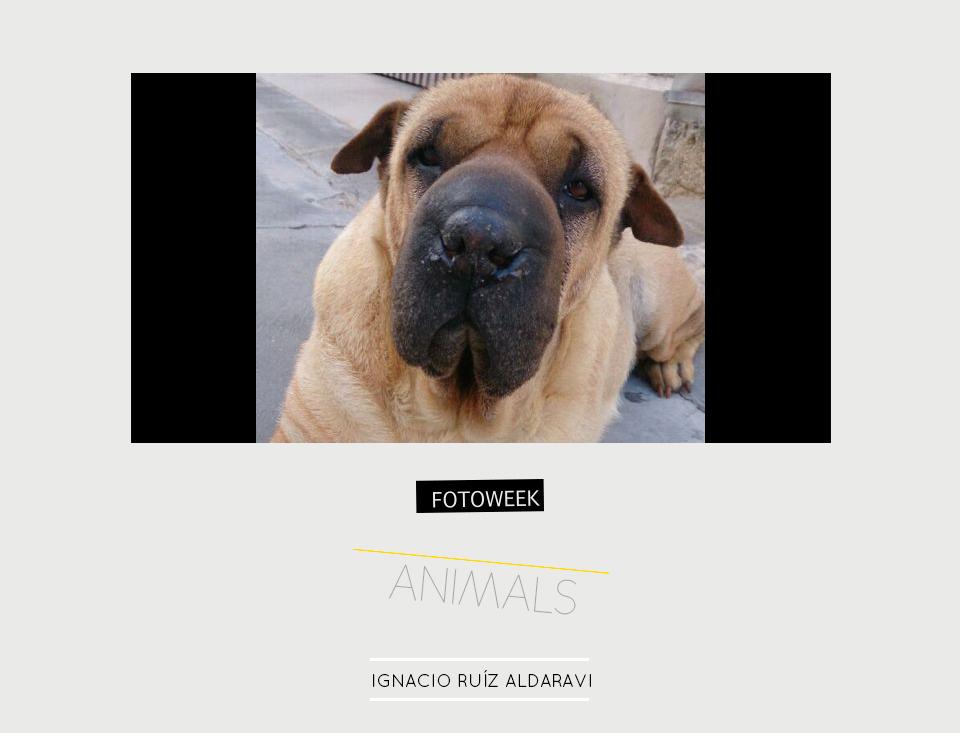 Fotoweek - Animals : Ignacio Ruíz Aldaravi © moversinmover