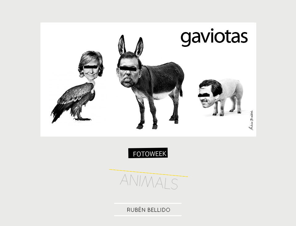 Fotoweek - Animals : Rubén Bellido © moversinmover