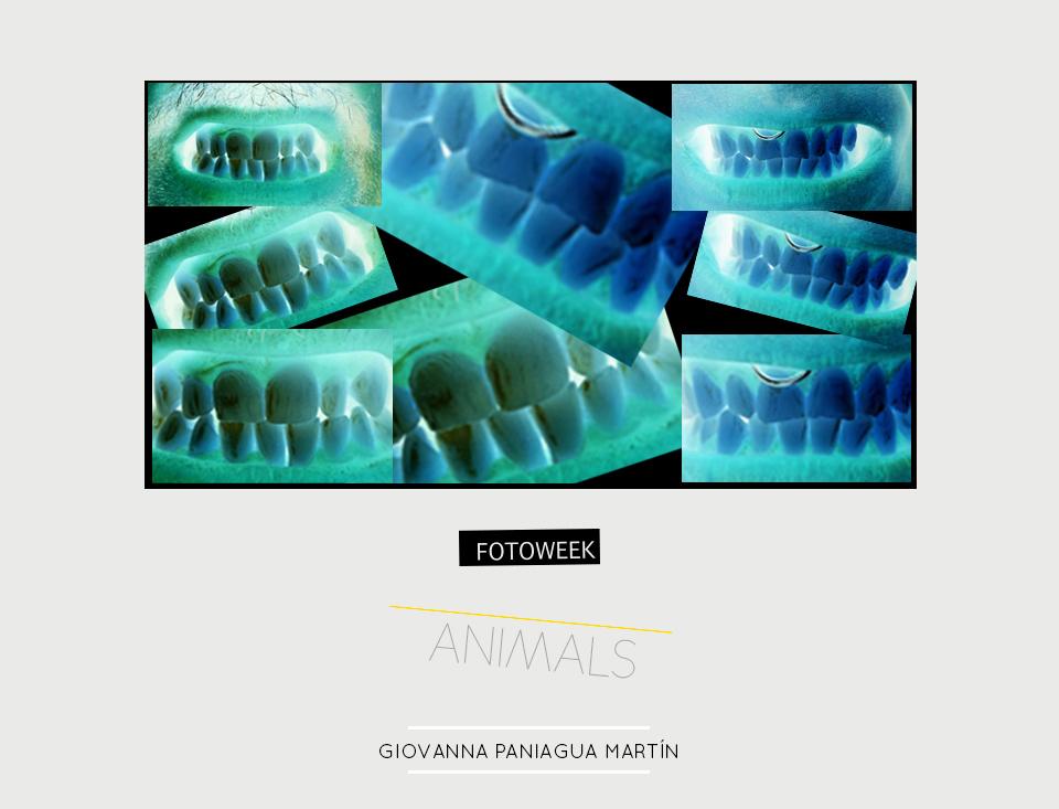 Fotoweek - Animals : Giovanna Paniagua Martín © moversinmover
