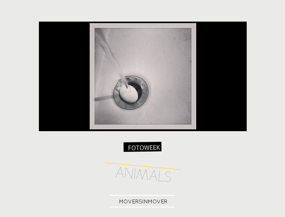 Fotoweek - Animals : moversinmover © moversinmover