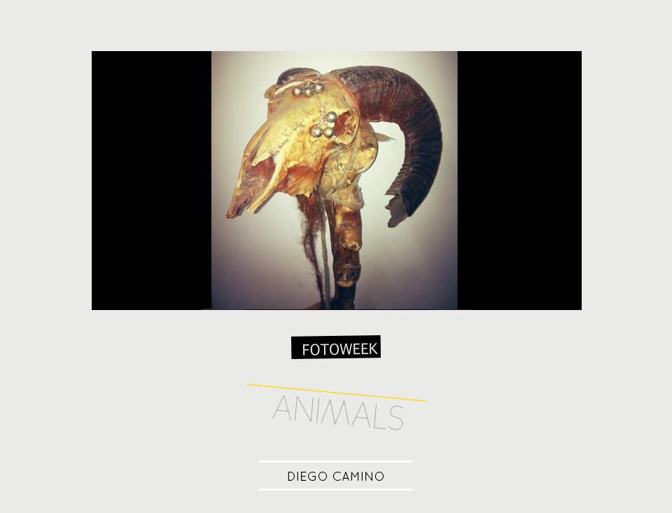 Fotoweek - Animals : Diego Camino © moversinmover