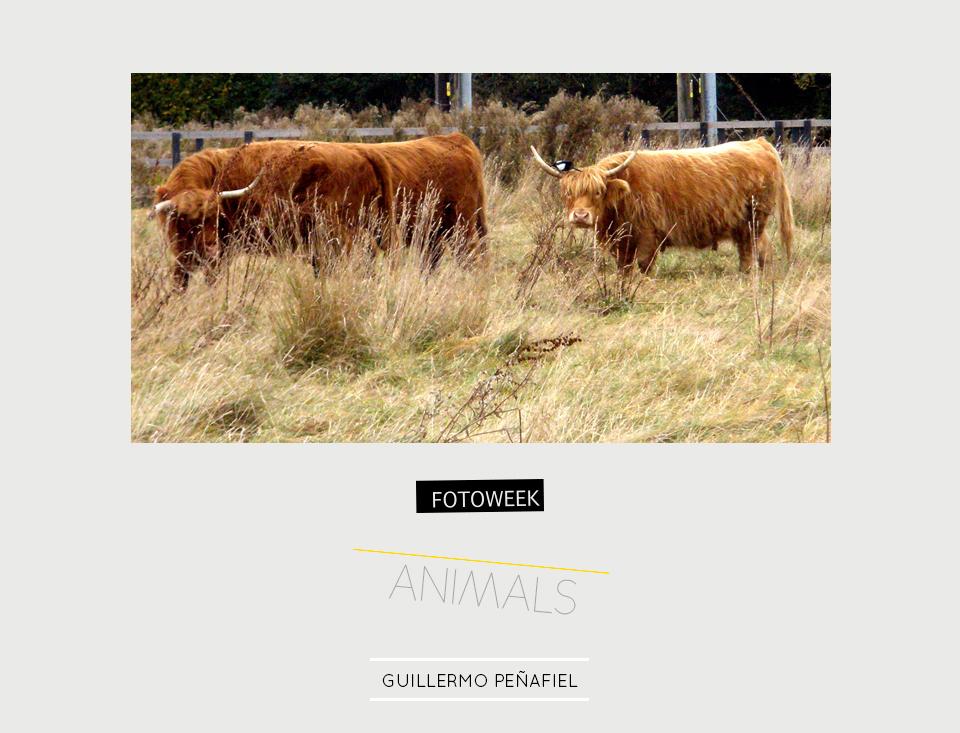 Fotoweek - Animals : Guillermo Peñafiel © moversinmover