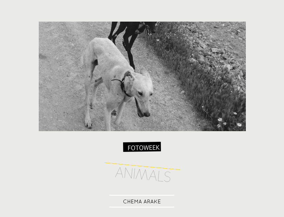 Fotoweek - Animals : Chema Arake © moversinmover