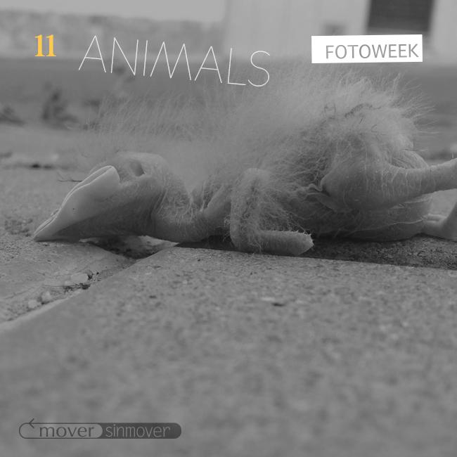 Galería online: Fotoweek - Animals © moversinmover